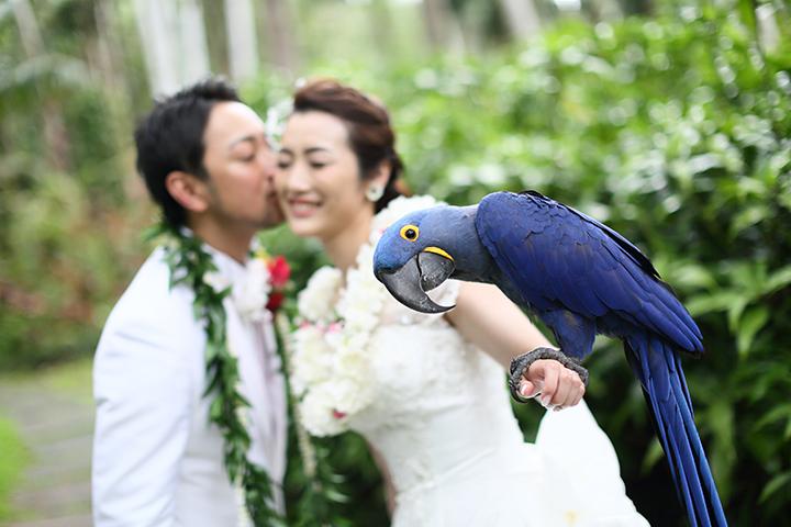 ハワイウエディングならではの【ドレス選び】のポイントとは?ハワイ婚,リノハワイ